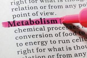 Read more about the article Does Growing Muscle Actually Increase Metabolism?